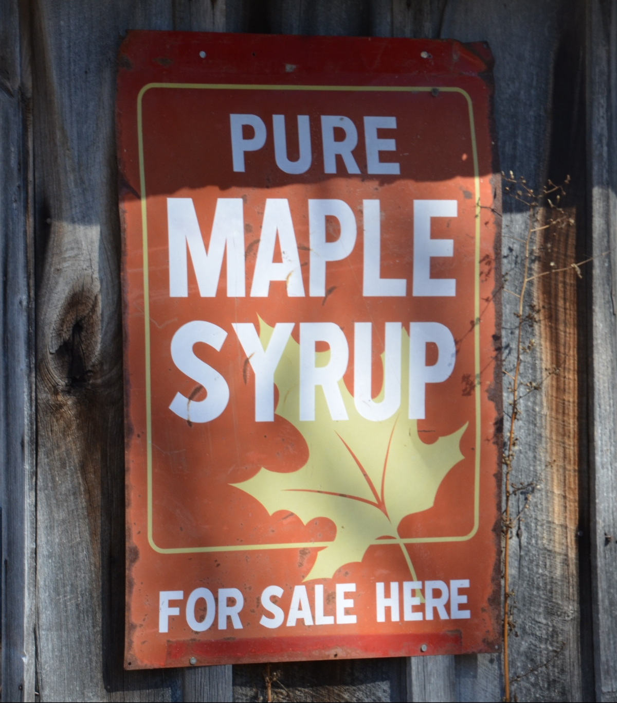 Maple Syrup Time
